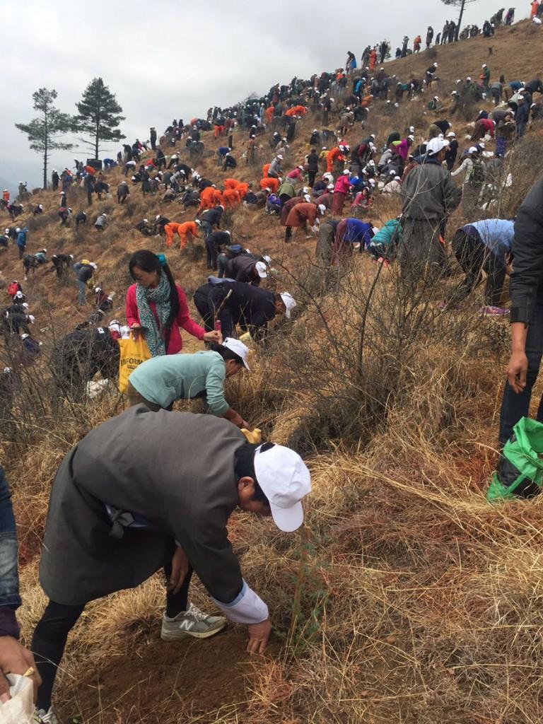 La-llegada-del-nuevo-príncipe-de-Bután-es-celebrada-con-108000-árboles-plantados-07