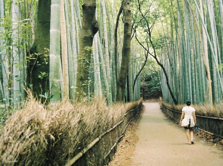 Bamboo_forest,_Arashiyama,_Kyoto_(oliveheartkimchi)