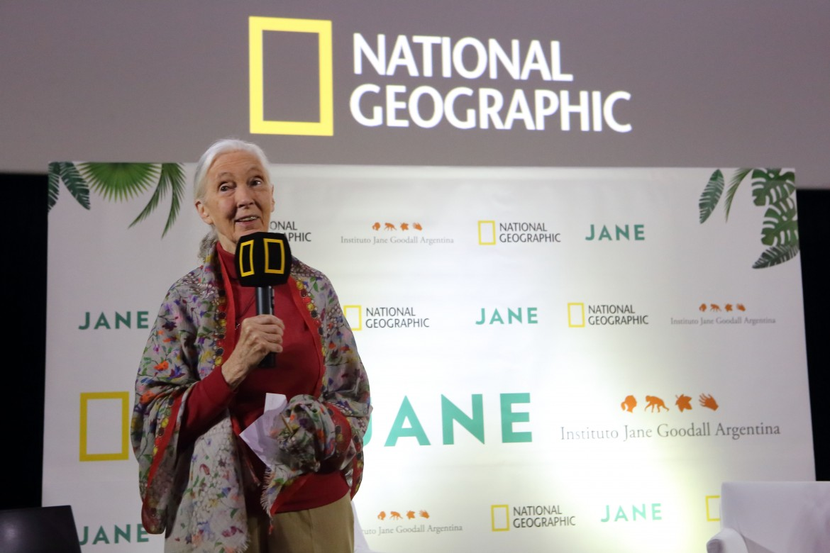 La Dra Jane Goodall @ National Geographic Avant Premiere Jane